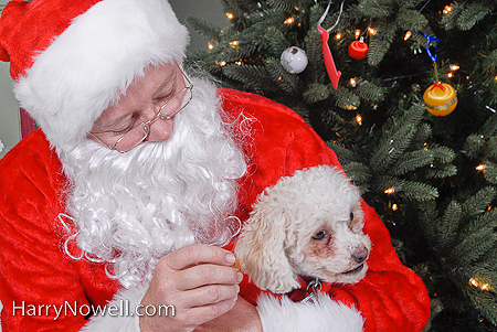 SPCA Santa dog photo
