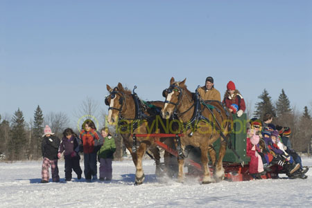 Sleigh ride - Sugarbush photo safari - Ottawa Valley
