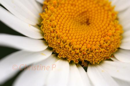 Custom Photography Course - © Christine Payant