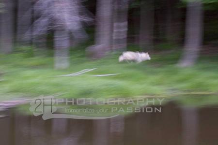 Student photo Wildlife Landscape Photo Class - J David Andrews