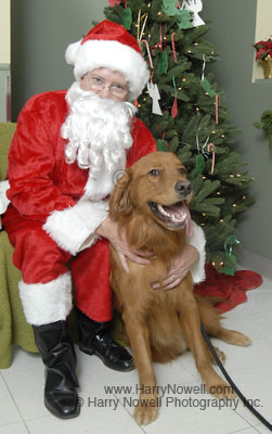 Dog photos with Santa