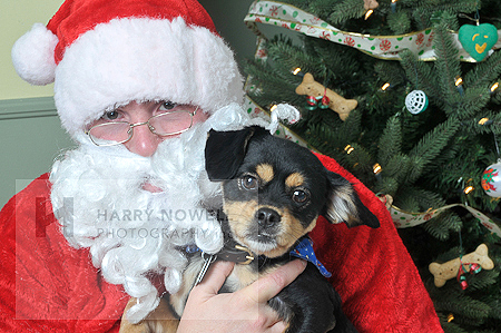 Merry Christmas - Santa & dog