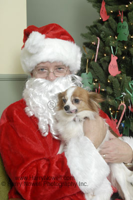Santa at the Aylmer SPCA