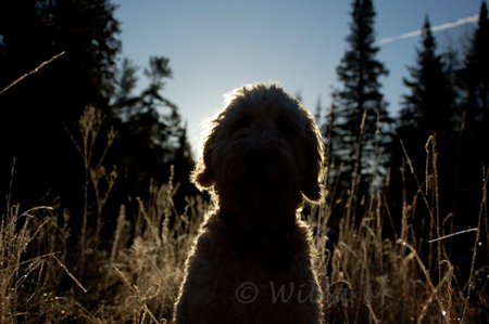 online photo workshop - sIlhouette challenge - © Willa Mason