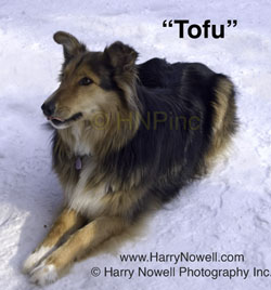 Tofu the dog