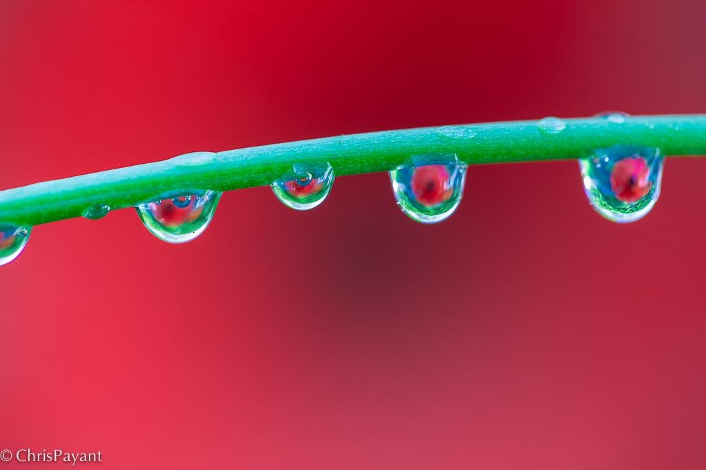 © Chris Payant - Macrophotography class